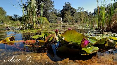 Alligator Bender Fountain