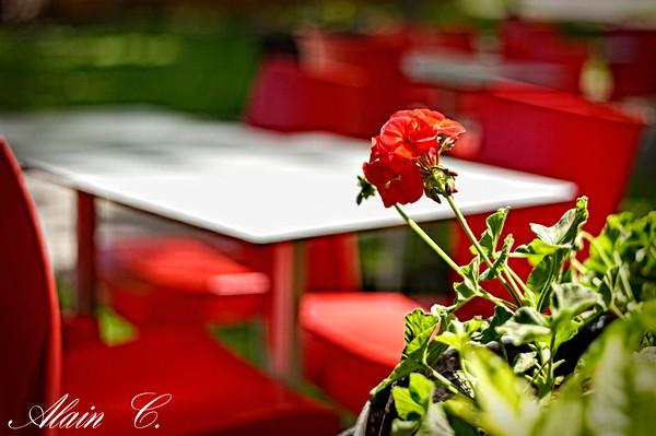 Le Mont Royal rouge